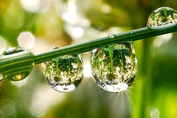 The Dew of Reflection